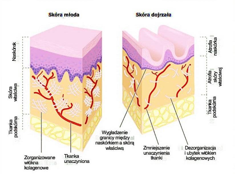starzenie się skóry odmładzanie wrocław