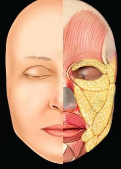 Niechirurgiczny-trwaly-lifting-twarzy-Kaniowscy-anatomia-twarzy